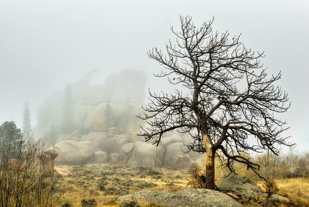 Vedauwoo, The Nautilus and Tree in Fog